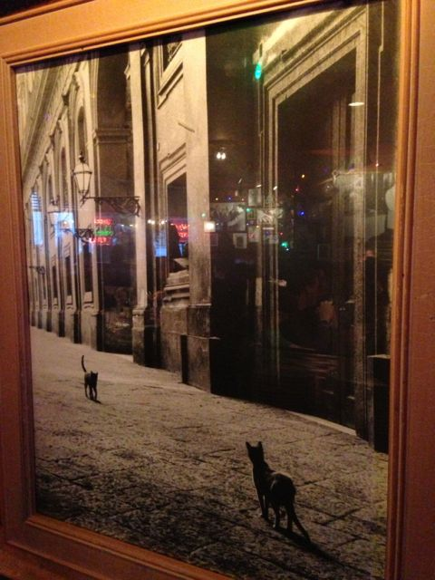 Two cats approaching each other on empty city street