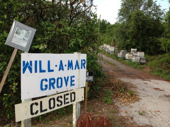 Will A Mar Orange Grove for sale