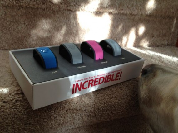 Dog sniffing Disney magic band box