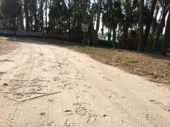 Residential dirt road in Windermere Florida