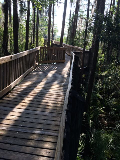 Florida nature trail boardwalk