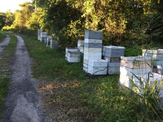 Honey Bee Hives near Disney's Magic Kingdom