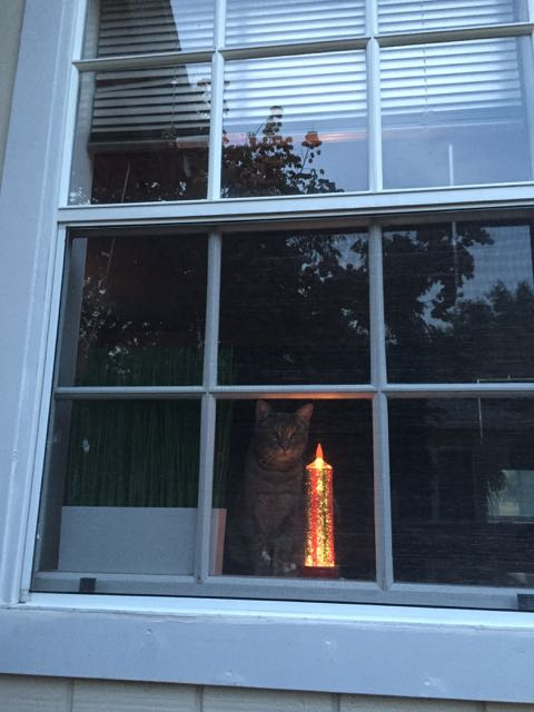 Cat in a window