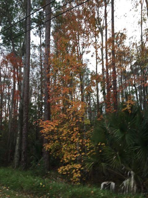 Florida roadside swamp