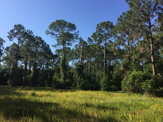 Field of Florida wildflowers
