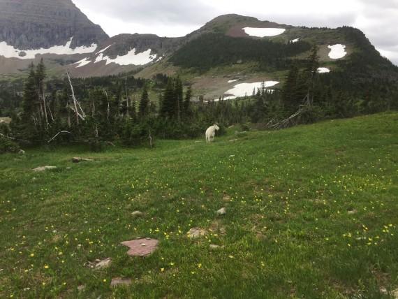 Hidden Lake Trail at Logan Pass