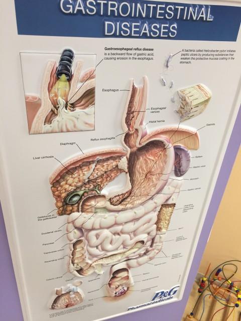 Digestive disease chart