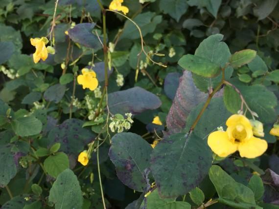 roadside yellow flowers