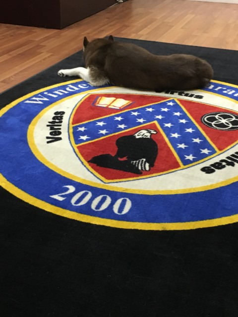Windermere Prep dog mascot, Willow