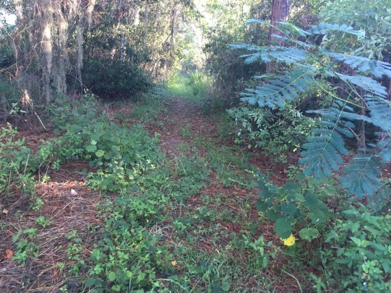 Secret running path near Disney World