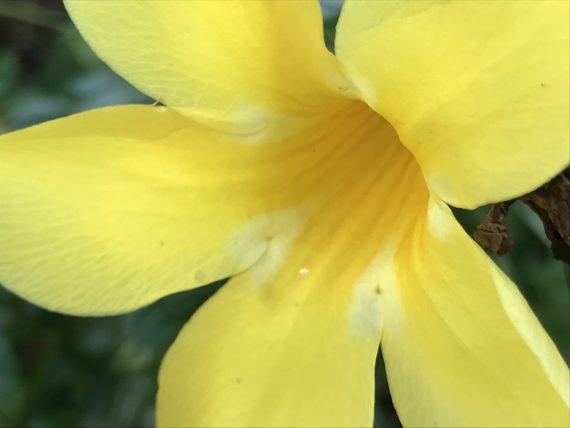Yellow Florida flower