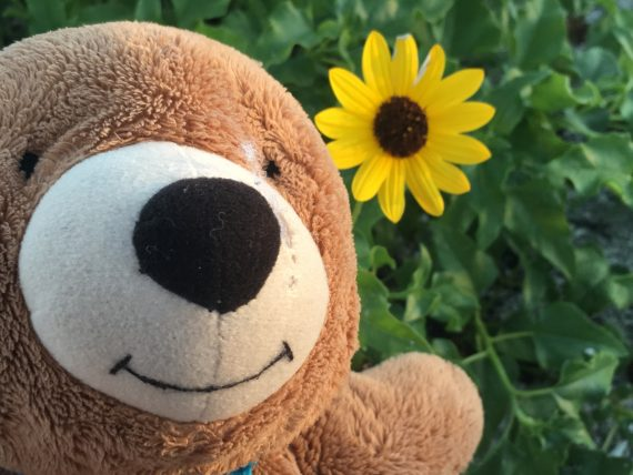 Beach sunflower with Teddy Bear