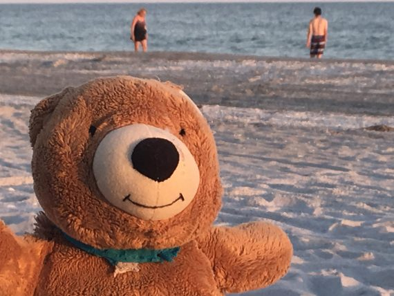 Teddy Bear at Sanibel Island