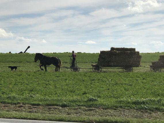 Lancaster, Pennsylvania Amish Farmer