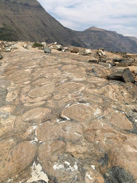 glacier park stromatolites