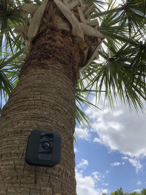 security cameras in Florida palm tree