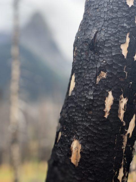 Glacier Reynolds Creek fire
