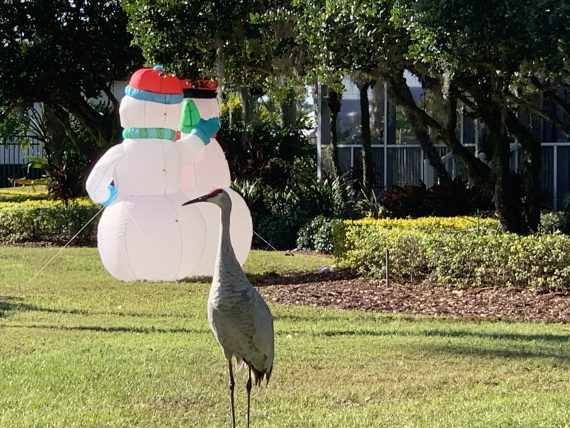 Sand Hill Crane and Snowmen