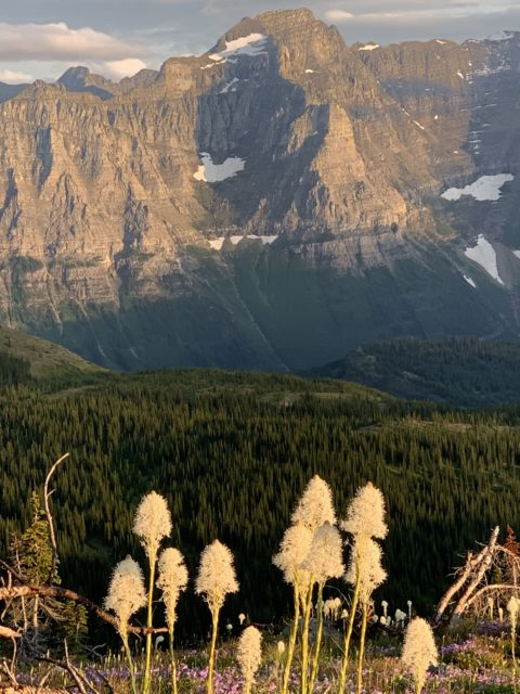 Beargrass from Granite Park Chalet