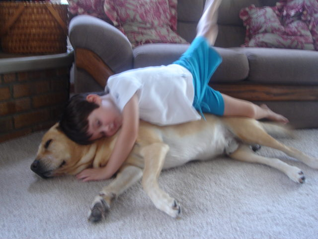 child laying on yellow lab