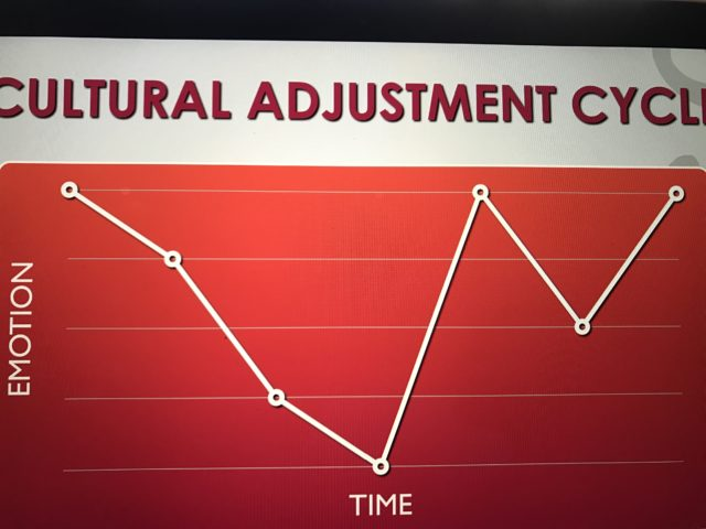 Cultural adjustment cycle image