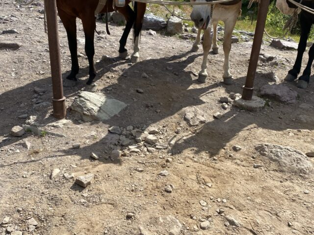 Shadow of horse on ground