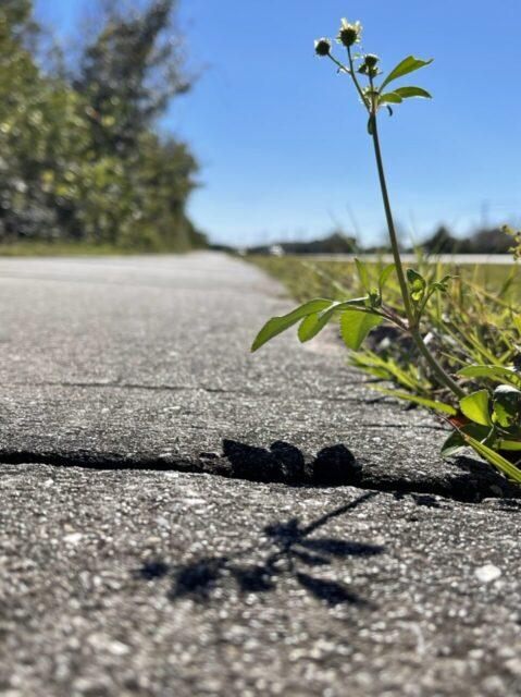 weed shadow on a sidewalk