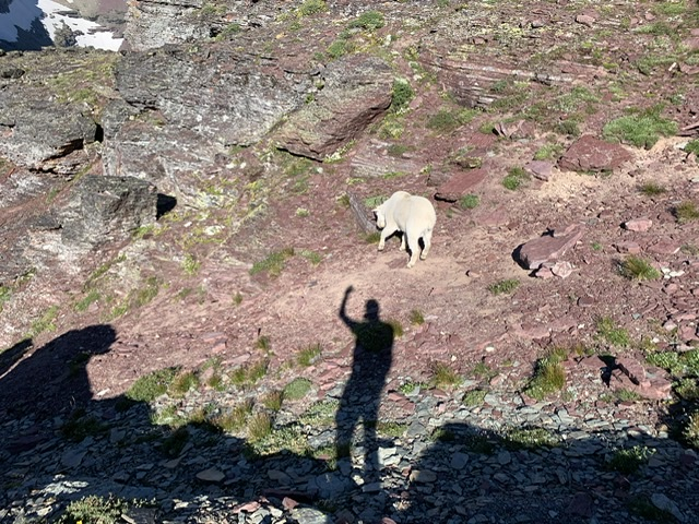 Mountain Goat and man's shadow