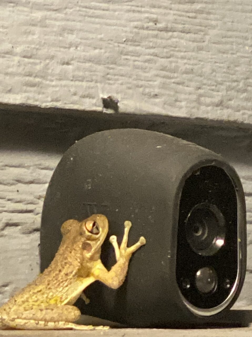 tree frog on security camera